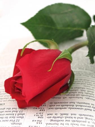 Bible_rose