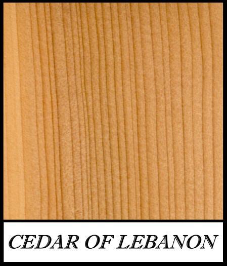 Cedar_of_lebanon_cedrus_libanotica