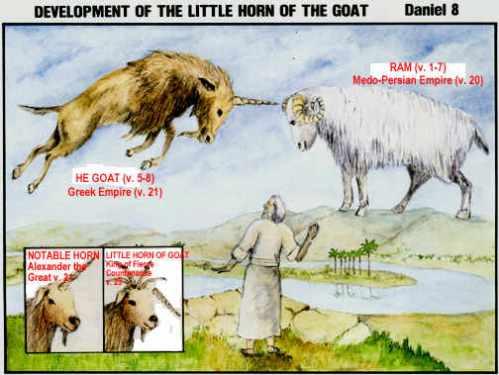 Daniel_goat