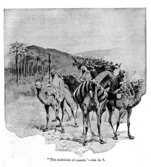 Isa_60_6_the_multitude_of_camels