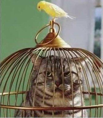 Smart_bird