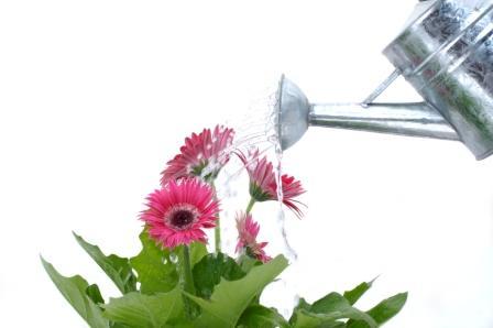 Water_flowers